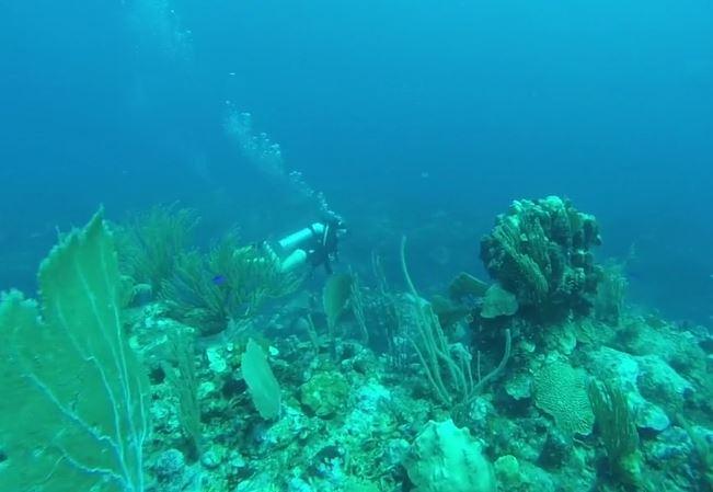 scuba-dive-person