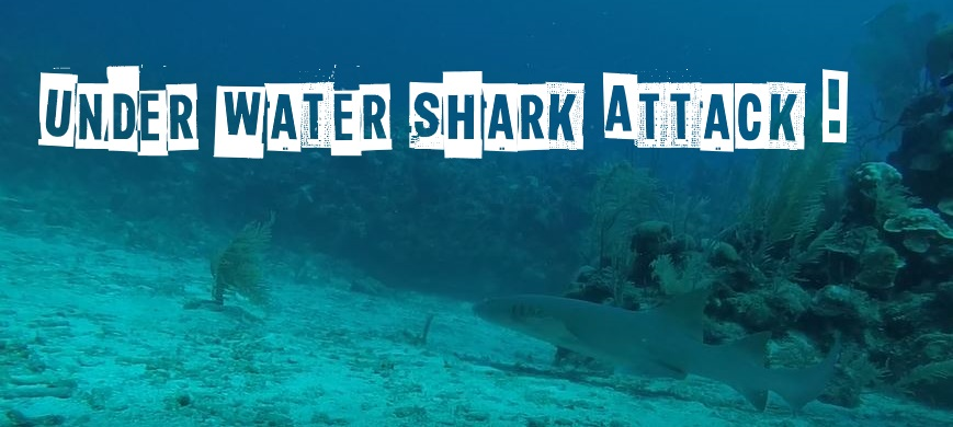 Underwater Shark Attack!