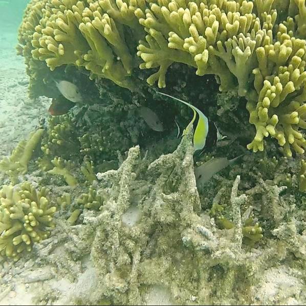 Coral Guam
