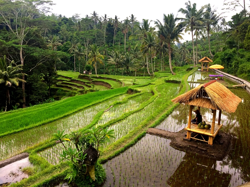 Bali couples travel