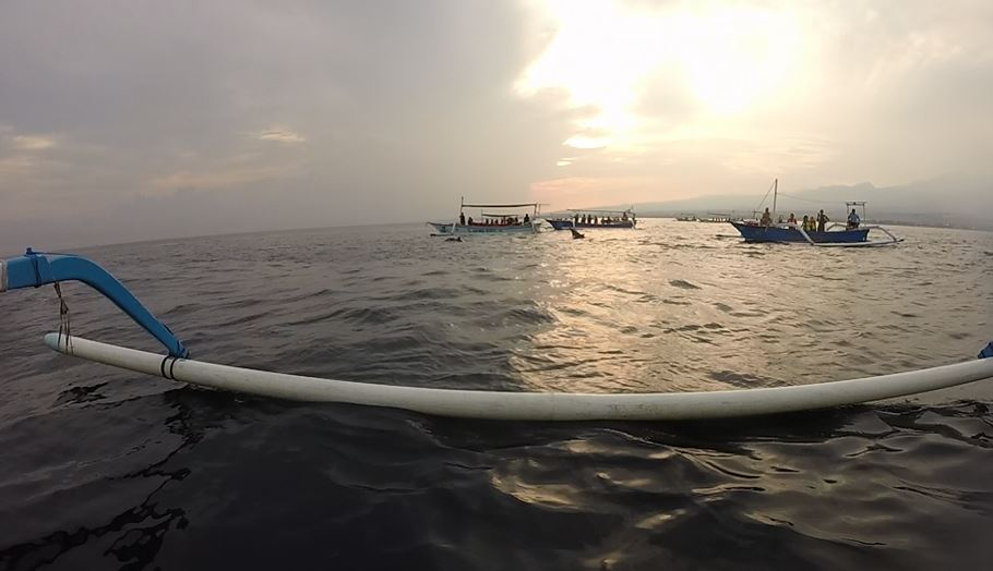 Dolphin Sunrise Tour