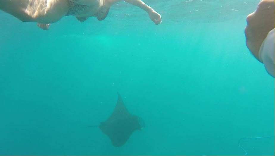 Snorkel or Dive with Massive Manta Rays in Bali