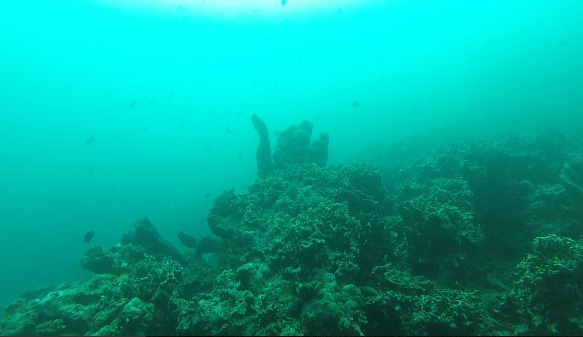 Scuba or Snorkel Menjangan Island