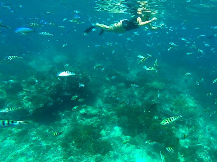 Mangrove dive site
